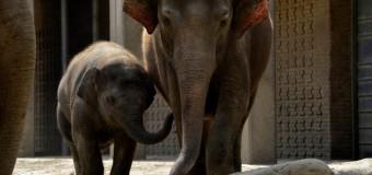 """Как се отглеждат """"Бебета в зоопарка"""" в Берлин – по Viasat Nature"""