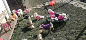 Официално изявление на Lucky Hunt Foundation във връзка с организиране на публичен търг от НАП за продажба на 72 кучета