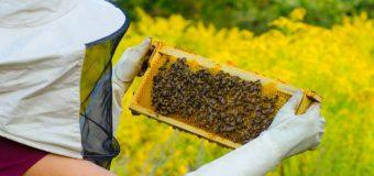 Производители и преработватели на пчелен мед се обявиха против споразумение между ЕС и Меркосур